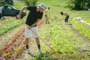 UM students working at Terp Farm  at Upper Marlboro CMREC